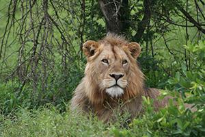 Kruger National Park Malelane